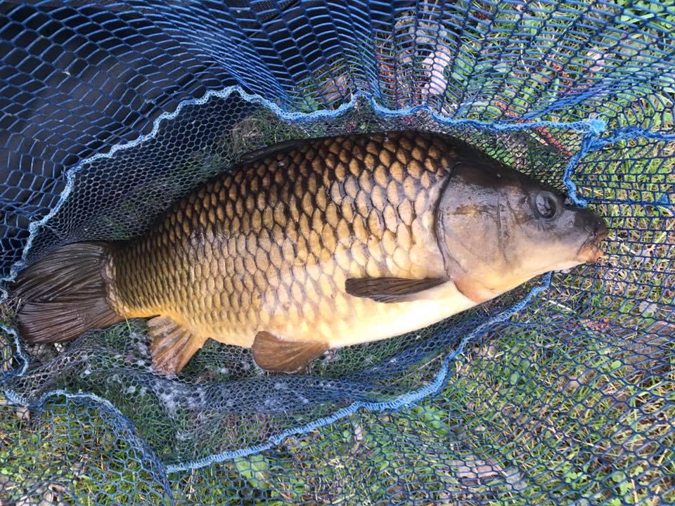 Ian's carp